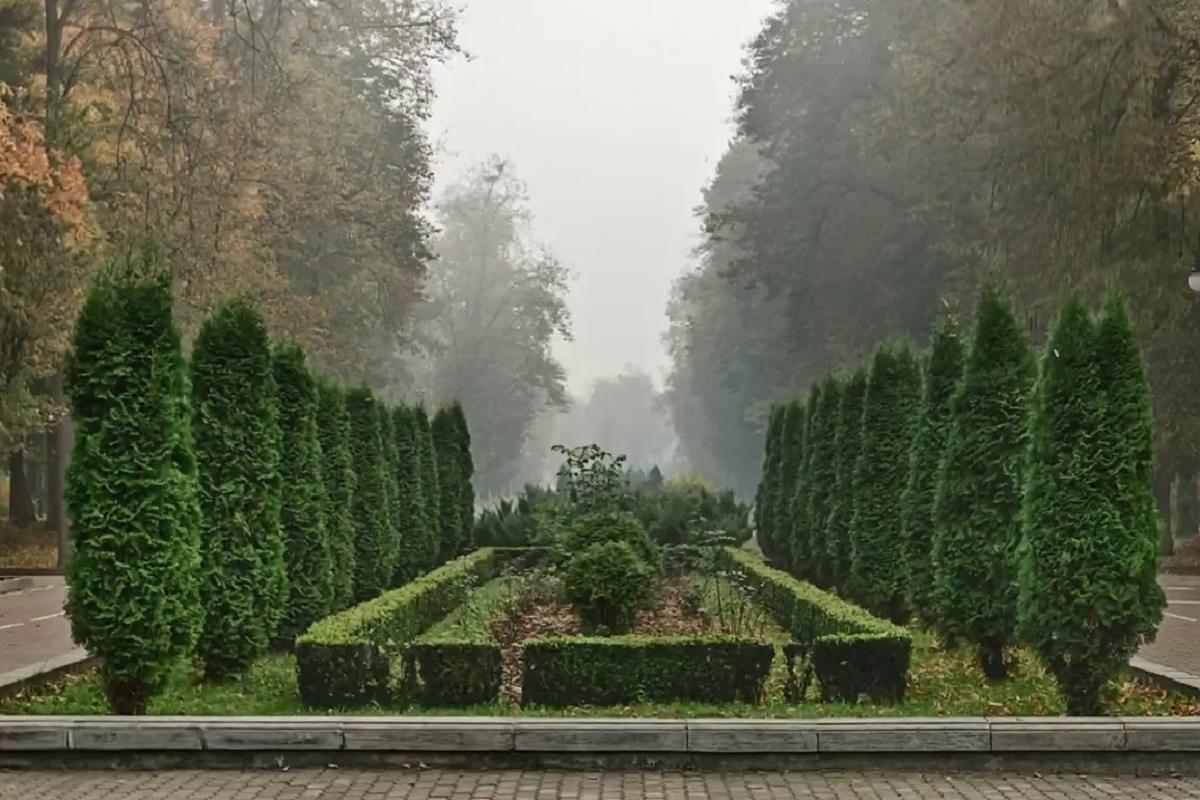 Які саме дерева висадили у Івано-Франківську